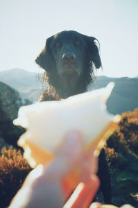 Your reader should stare at your copy like this dog stares at cheese. IF you use the AIDA copywriting formula!